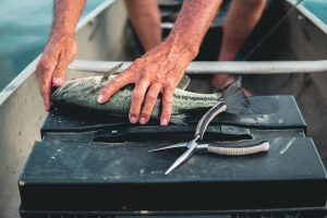 Man using Fishing Pliers on a freshly caught fish